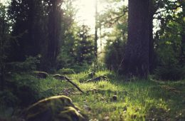 forest-653448_960_720